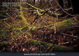 Unterholz entfernen